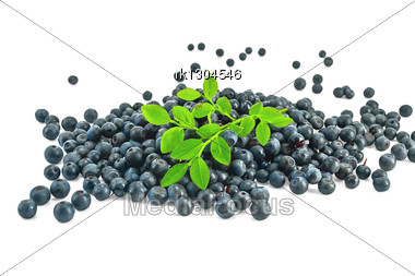 Pile Of Blueberries With A Sprig Isolated Stock Photo