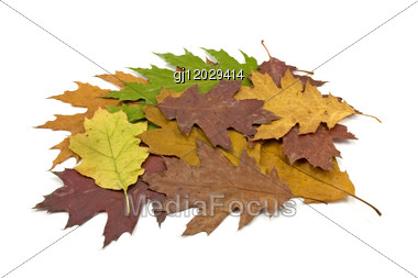 Pile Of Dirty Fallen Leaves Stock Photo