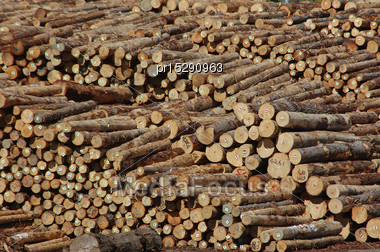 Piles Of Pinus Radiata Logs For Export At Port Of Lyttleton, South Island, New Zealand Stock Photo