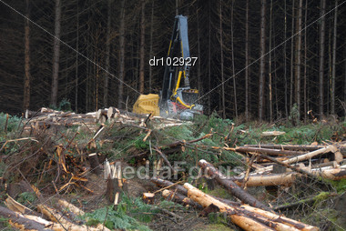 Pine Harvesting in the Scottish Highlands Stock Photo