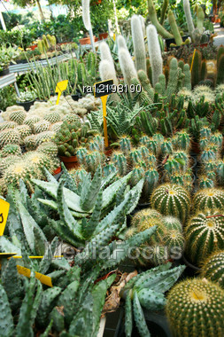 Plantation House With Different Cactuses In Cyprus. Stock Photo