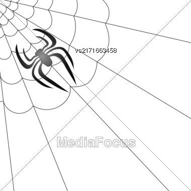 Poisonous Spider And Her Cobweb On White Background Stock Photo