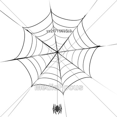 Polygonal Grey Spider And Her Cobweb On White Background Stock Photo