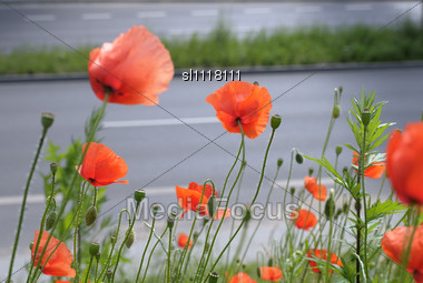 Poppy Flowers On A Wind Against A High-speed Transport Highway Stock Photo