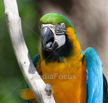 Portrait Of A Macaw Perched On A Tree Branch Stock Photo