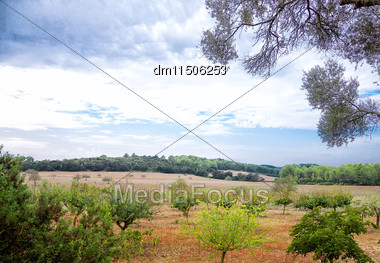 Portrait Of Field And Forest Landscape Stock Photo
