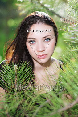 Pretty Brunette Posing In The Branches Of Pine Tree Stock Photo