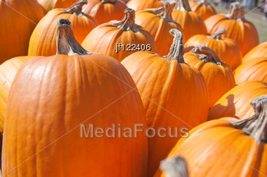 Pumpkins Lines Up During The Halloween Holiday. Stock Photo