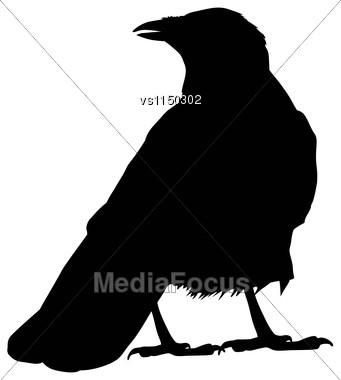 Raven Vector Silhouette Stock Photo