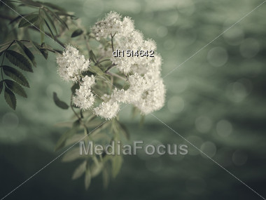 Rawan Flowers, Retro Floral Backgrounds With Faded Colors Stock Photo