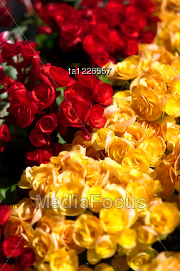 Red And Yellow Flowers Close-up Stock Photo