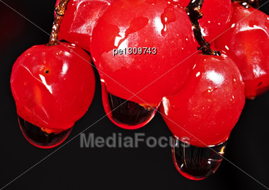 Red Berries Of A Guelder-rose With Waters Drops After The Rain Stock Photo