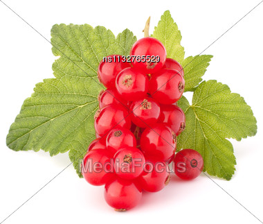 Red Currants And Green Leaves Still Life Isolated On White Background Cutout Stock Photo