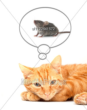 Red Cute Cat Stock Photo