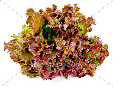 Red Lettuce Isolated On The White Background Stock Photo