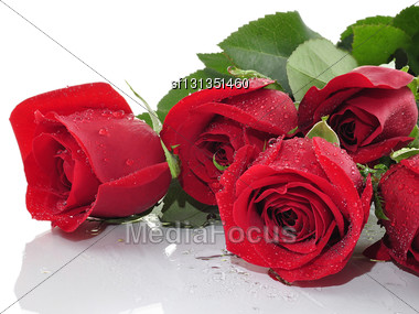 Red Roses With Water Drops , Close Up Stock Photo