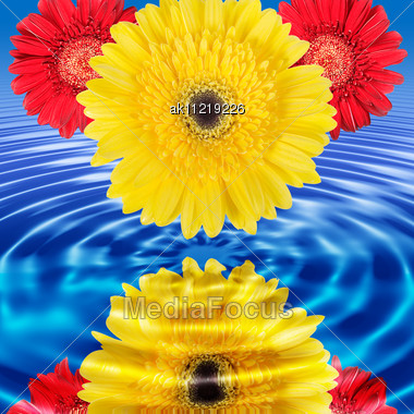 Stock photo reflection red yellow flowers blue water image reflection of red and yellow flowers in blue water close up studio photography mightylinksfo