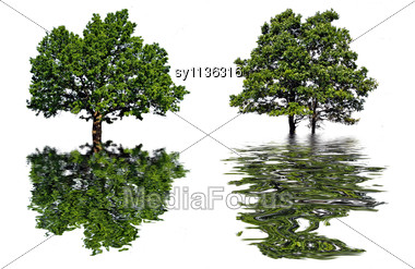 Reflection Tree In Water Stock Photo