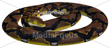 Reticulated Python Or Python Reticulatus, A Species Of Python Found In Southeast Asia Stock Photo