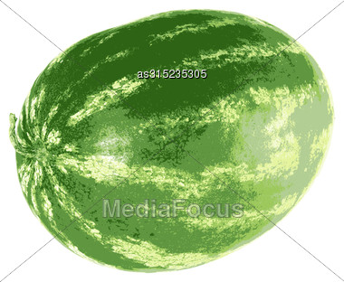 Ripe Watermelon Isolated On White Background. Vector Illustration Stock Photo