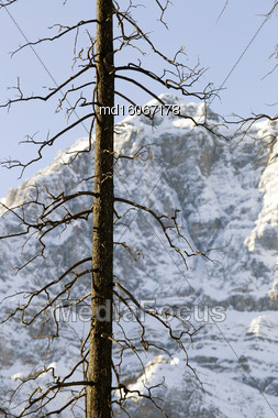 Rocky Mountains In Winter Canada Icefields Parkway Forest Fire Stock Photo