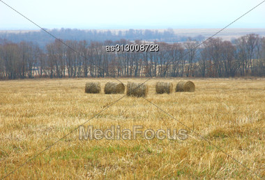 Rolls Of Fresh Hay In The Field Against The Blue Sky And Trees. Stock Photo