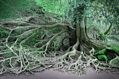 Roots Of The Magic Tree Stock Photo