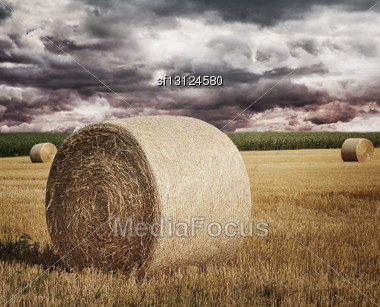 Round Straw Bales On A Field Stock Photo