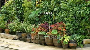 Row Of Flower Pots In The Garden Stock Photo