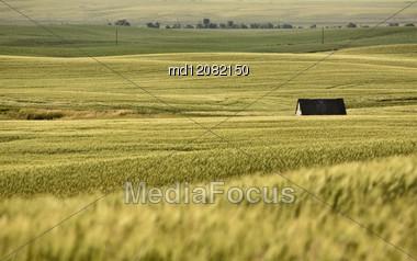 Rural Saskatchewan In Summer With Crops Canada Stock Photo