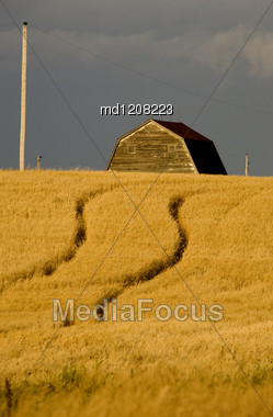 Rural Saskatchewan In Summer With Crops Canada Barn Stock Photo
