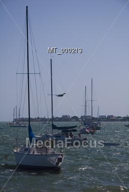 Sailboats at Sarasota Bay Stock Photo