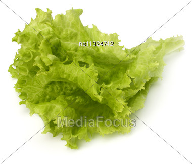 Salad Lettuce Isolated On White Background Stock Photo
