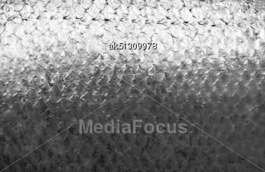 Salmon Fish Scales Grunge Texture Back Ground Stock Photo