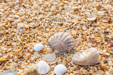 Sand, Pebbles, Shells, Sea Coast Close-up Stock Photo