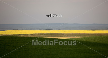 Saskatchewan Farmland In Summer Crops And Sky Stock Photo