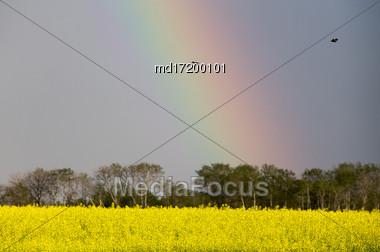 Saskatchewan Farmland In Summer Crops Canola Yellow Stock Photo