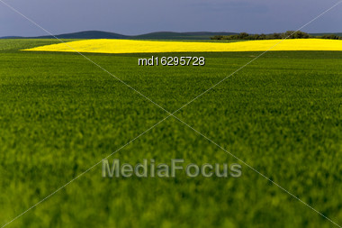 Saskatchewan Field Farming In Yellow And Green Stock Photo