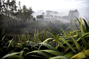 Scenic Plants New Zealand Taupo Area Bay Of Plenty Stock Photo