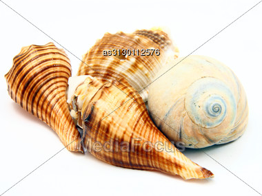 Sea Shell With Reflection Stock Photo