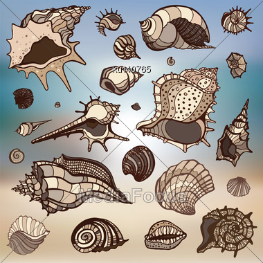Sea Shells Collection. Hand Drawn Vector Illustration. Sea Background Stock Photo