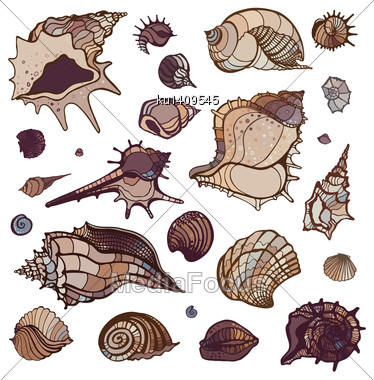 Sea Shells Collection. Hand Drawn Vector Illustration Stock Photo