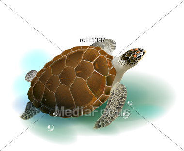 caretta asian singles Caretta caretta (linnaeus 1758 to support the largest single nesting of ngos and governments participated in the 2nd association of southeast asian nations.