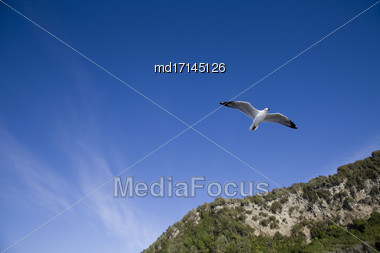Seagull In Flight New Zealand Blue Sky Clouds Stock Photo