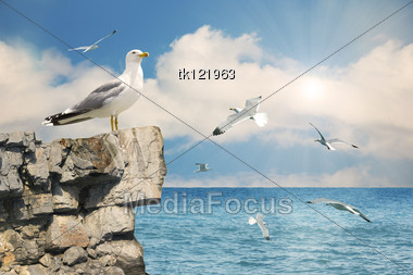 Seagulls In The Sky.Nature Seascape Background Stock Photo