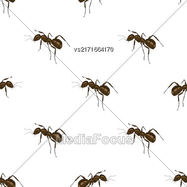 Seamless Animal Pattern. Ant Isolated On White Background Stock Photo