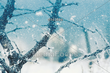 Seasonal Backgrounds With Snowfall Over The Forest Stock Photo