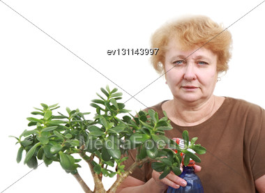 Senior Lady Wipes Foliage On A Plant. Isolated Over White Stock Photo
