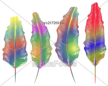Set Of Different Colorful Feathers Isolated On White Background Stock Photo