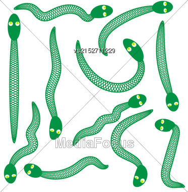 Set Of Green Snakes Isolated On White Background Stock Photo